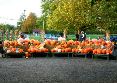 Halloween Pumpkin Patch at Crockford Bridge Farm Addlestone Surrey