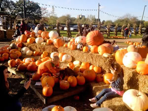 Halloween & Pumpkin Patch Fun at Addlestone Surrey Farm