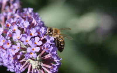 Beekeeping Course in Hersham & Weybridge Elmbridge Surrey