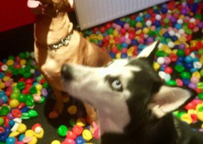 Crazy Dog Hotel & Daycare 12