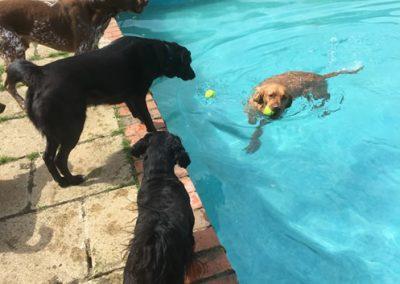 Crazy Dog Hotel & Daycare 2