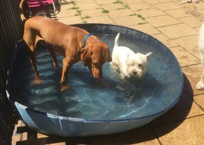 Crazy Dog Hotel & Daycare 3