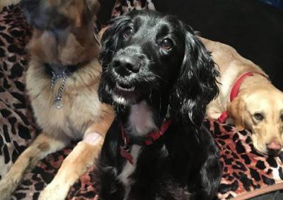 Crazy Dog Hotel & Daycare 6
