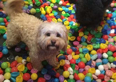 Crazy Dog Hotel & Daycare 7