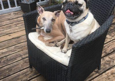 Crazy Dog Hotel & Daycare 8