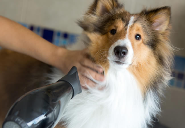 Dog grooming - Pet Services in Weybridge and Elmbridge Surrey
