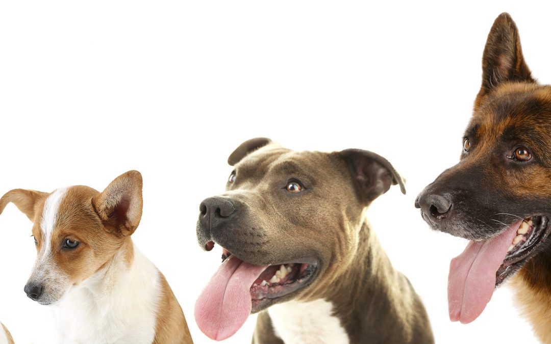 Dog Show At Brooklands Fun Day – Free To Enter
