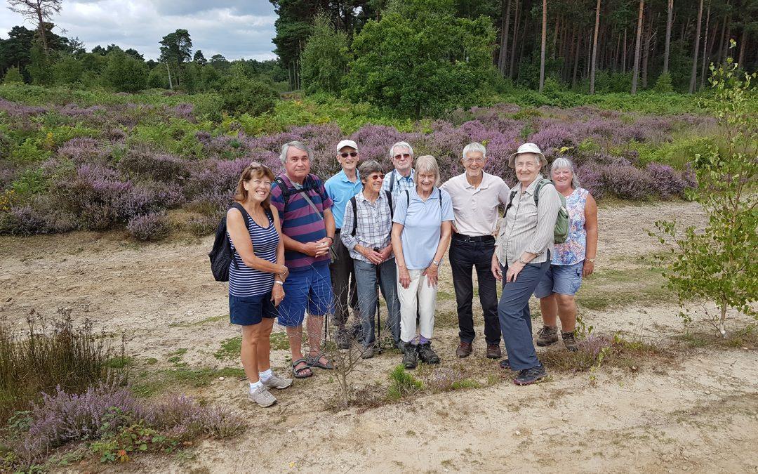 Chatley Heath Cobham Surrey – Elmbridge Healthy Walk