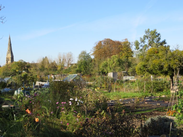 Weybridge Society - Churchfields Allotments