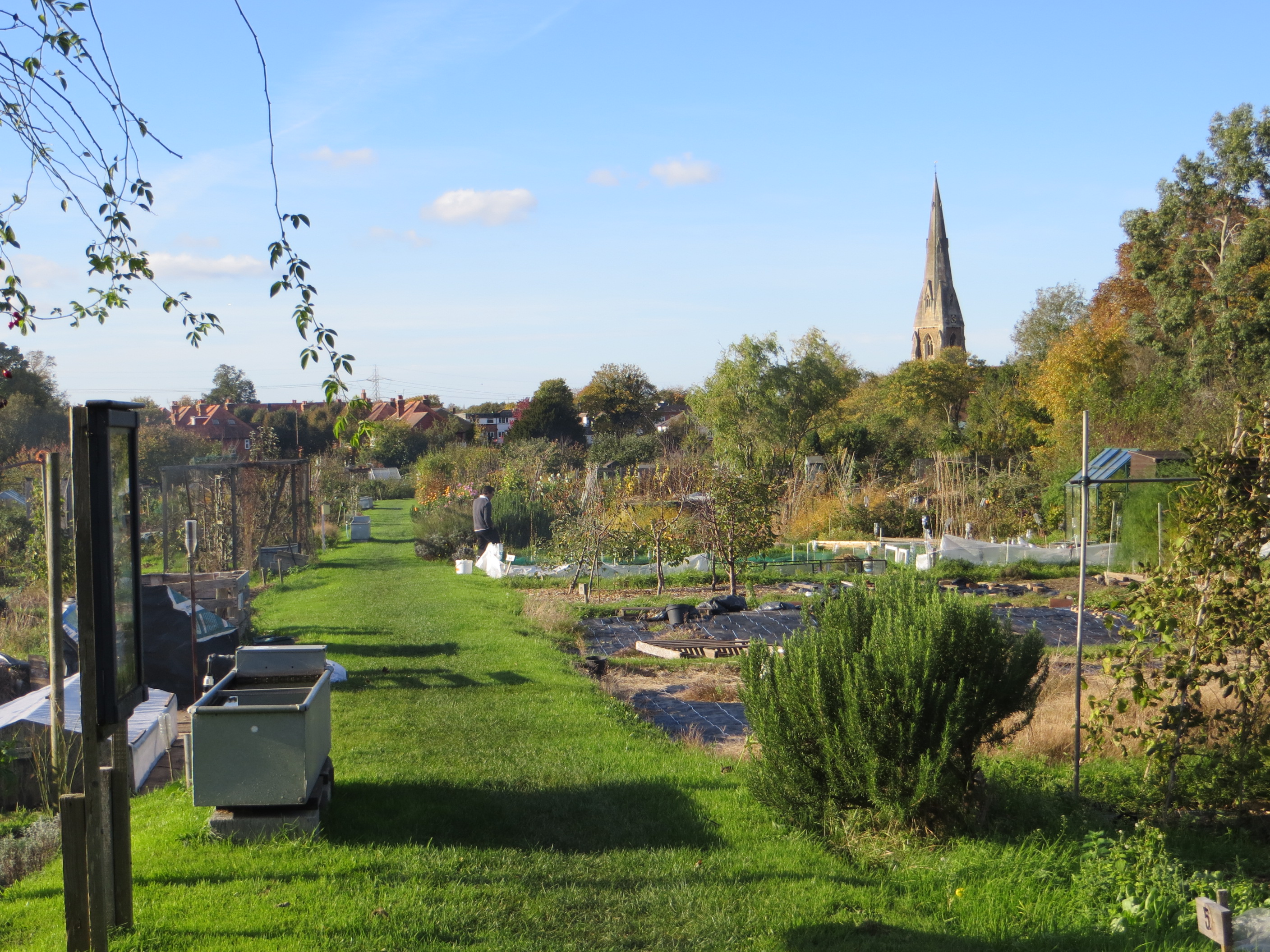 Weybridge Society - Allotments