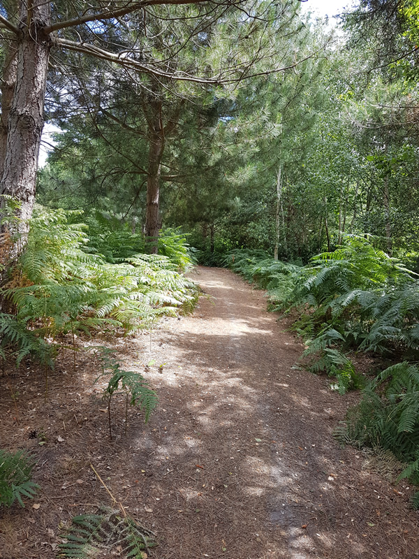 Whiteley Village Healthy Walk in the Woods Organised by Elmbridge Borough Council