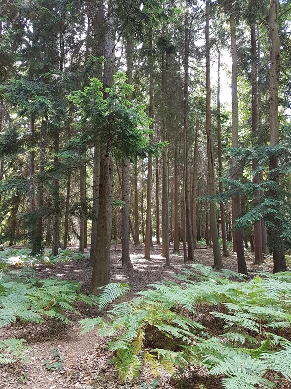 Whiteley Village Woods Hersham Elmbridge Photo