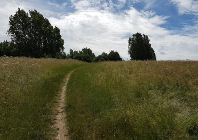 Elmbridge Surrey Healthy Walks