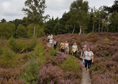 Healthy Walks Chatley Heath