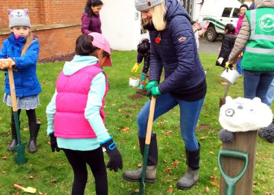 Weybridge In Bloom - Bulb Planting for approach to town centre