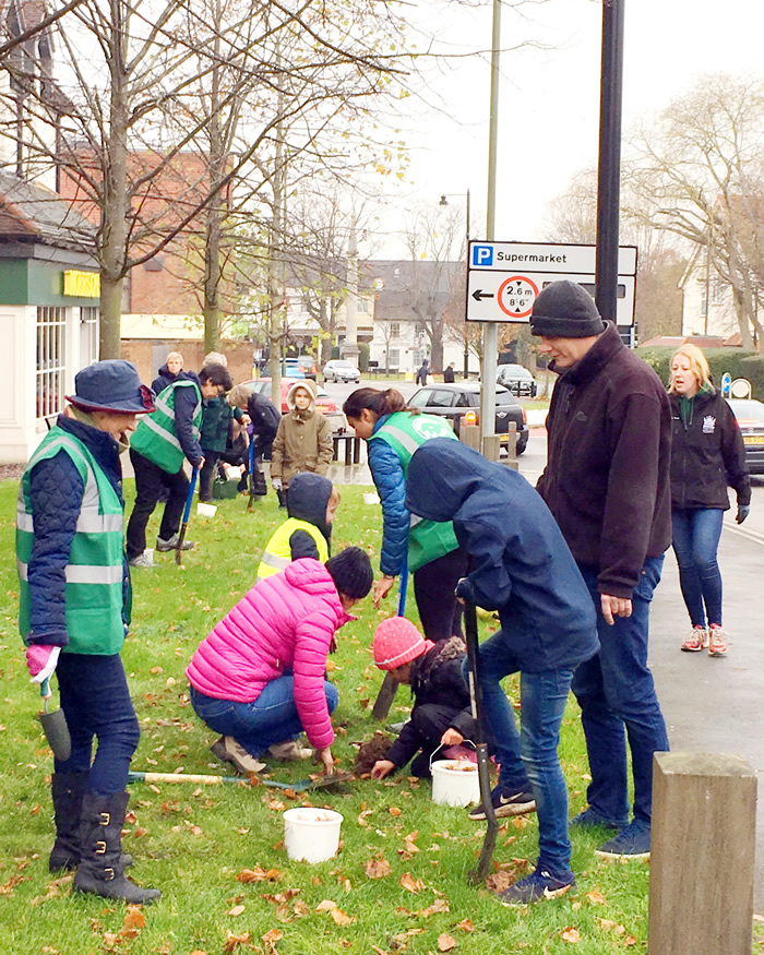 Bulb planting at the approach to Weybridge Town Centre - Weybridge In Bloom Event