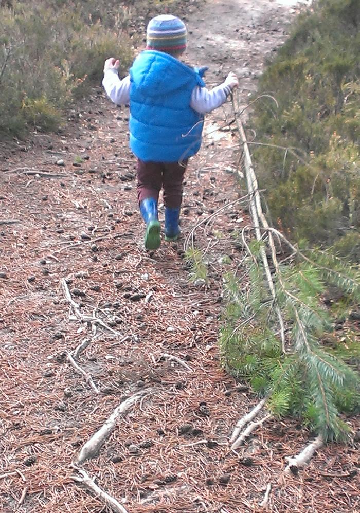 Christmas Pine Pull - Esher Common