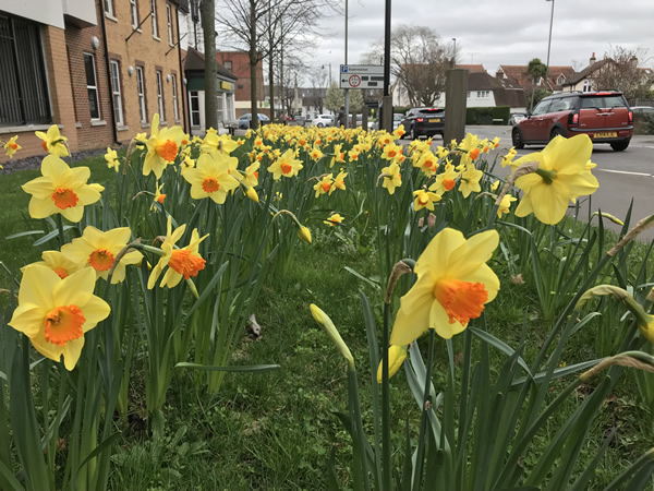 Weybridge in Bloom is a community project aimed at increasing civic pride in the town