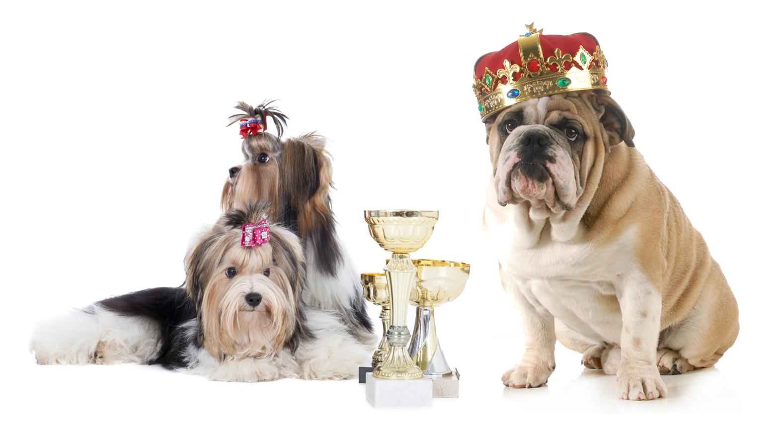 Peterson's Fund for Children Barkin' Mad Dog Show & Family Fun Day in Hersham