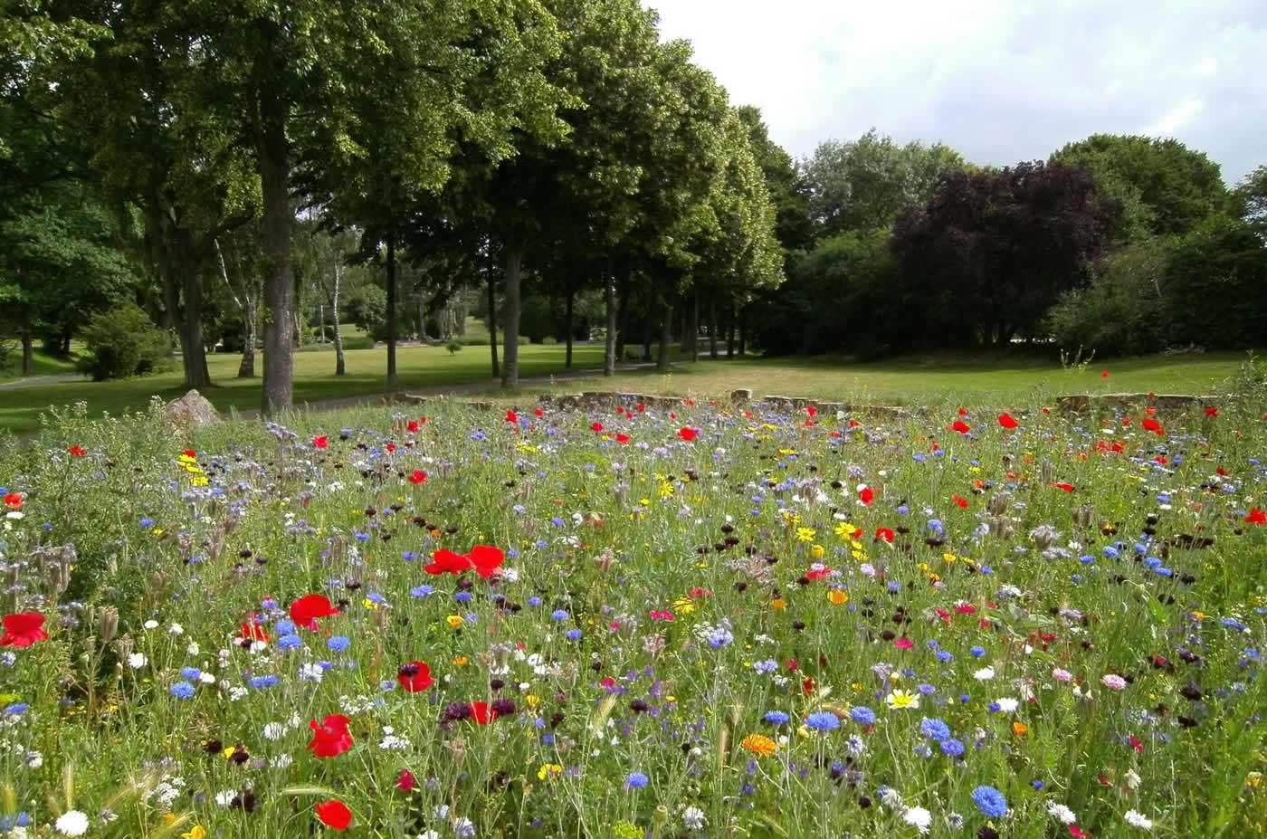 Meadow Planting Will Take Place in Churchfields Recreation Ground Weybridge