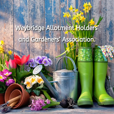 Weybridge Allotment Holders and Gardeners Association