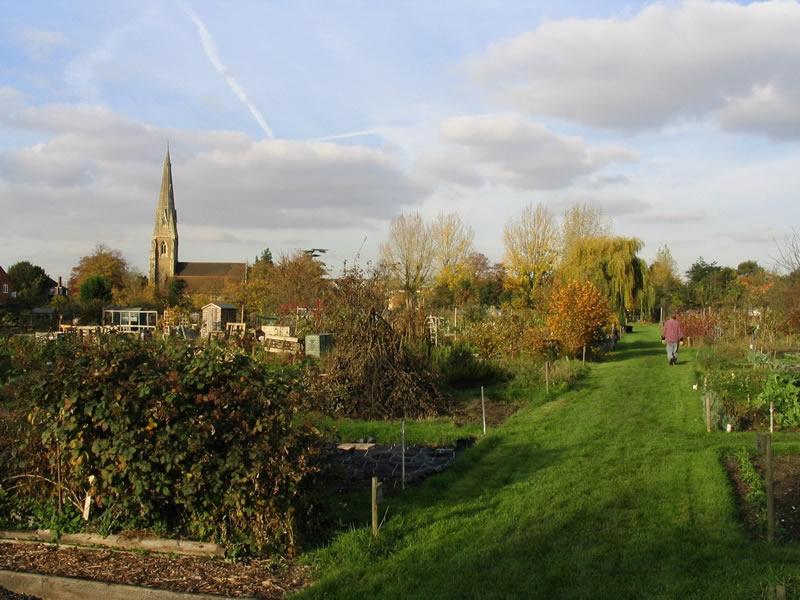 Churchfields Allotments in Weybridge Surrey - Gardening & Vegetable Growing