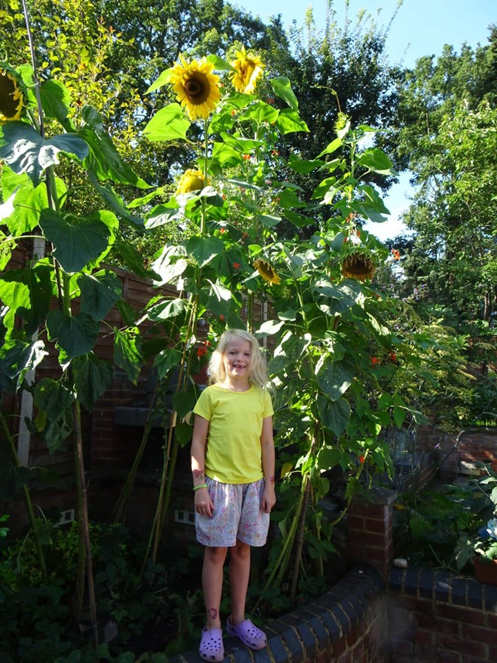 Children receiving seeds for Sunflower Growing Competition run by Weybridge Allotments -