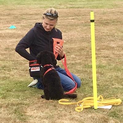 Dog Training by Paws & Purrs Dog Walking Services Weybridge Surrey