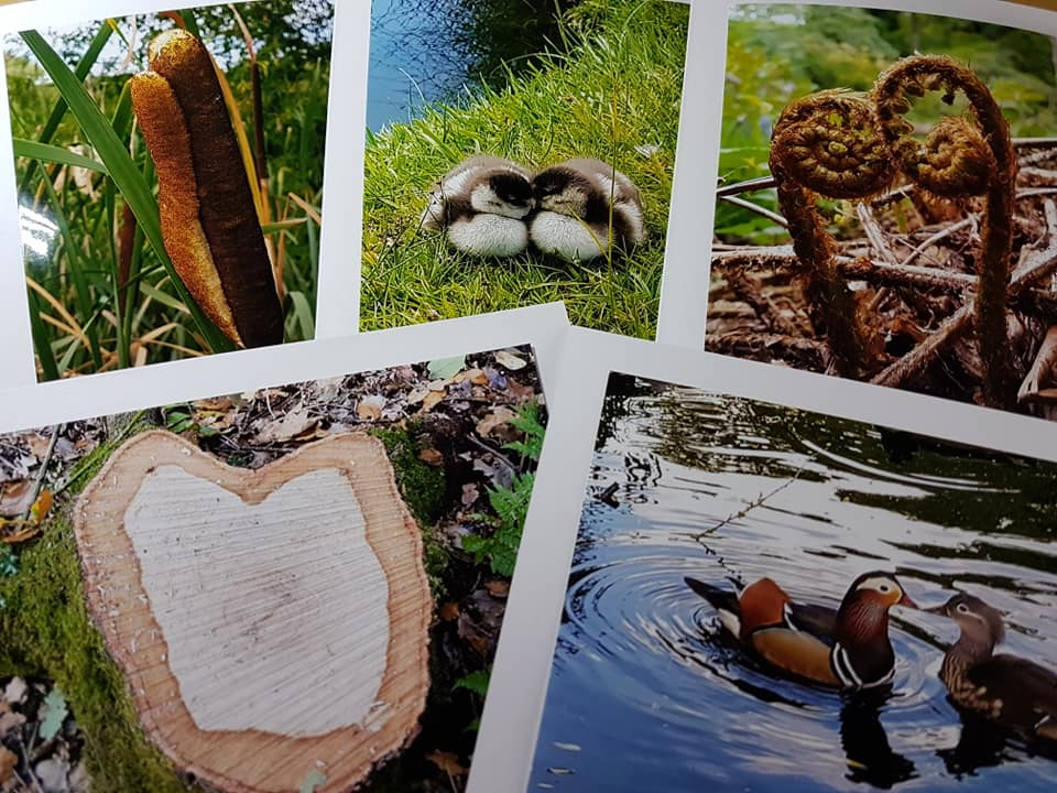 Cards for sale - Muddy Boot Photos stall at Molesey Community Centre Christmas Fayre