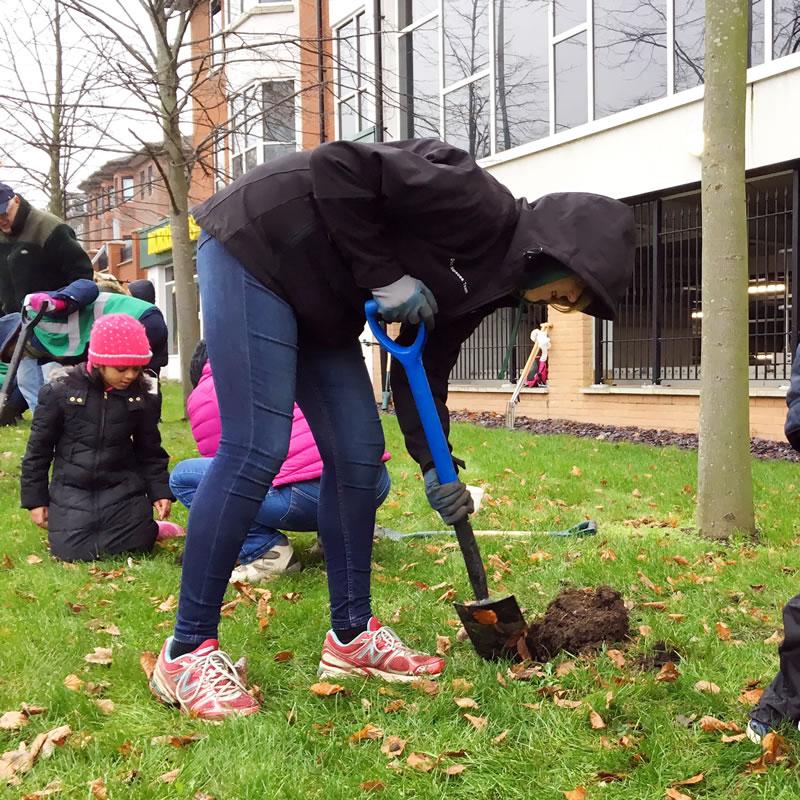 Weybridge In Bloom Planting