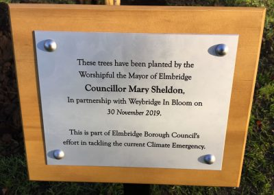 Weybridge Tree Planting - Elmbridge Mayor Mary Sheldon