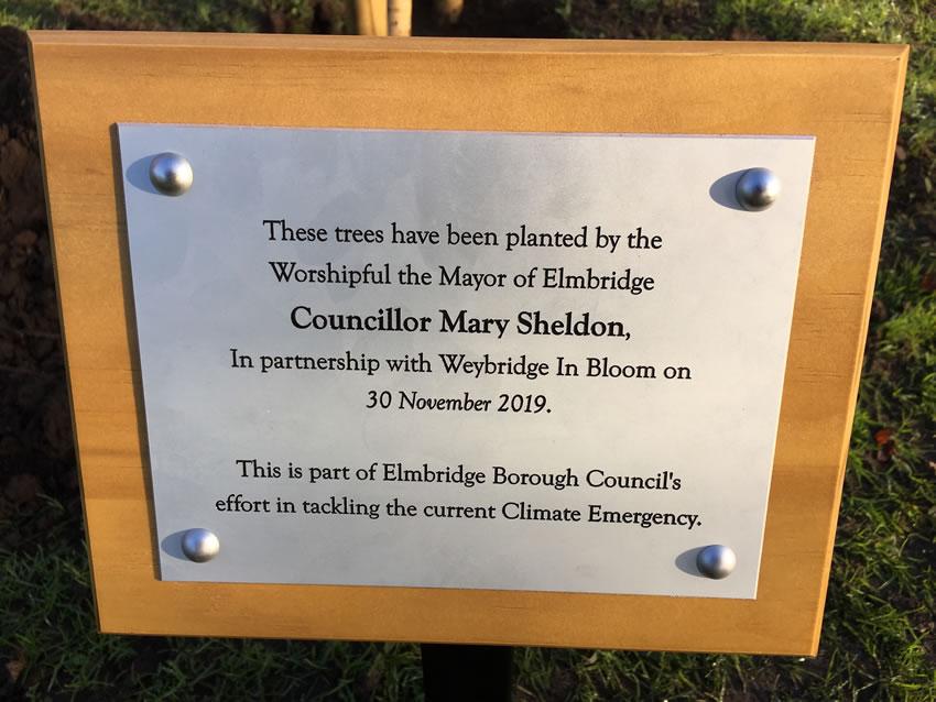 Weybridge Tree Planting - Elmbridge Mayor Mary Sheldon