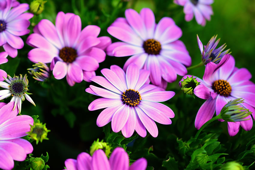 Beautiful flowers - gardens in virtual show for Princess Alice Hospice Esher Surrey