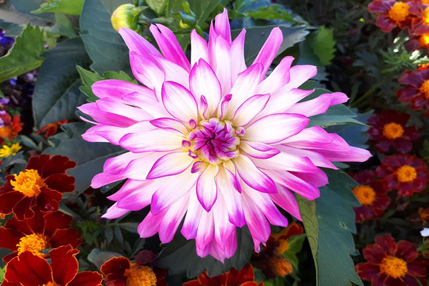 Garden show online - Weybridge Walton Esher Hersham