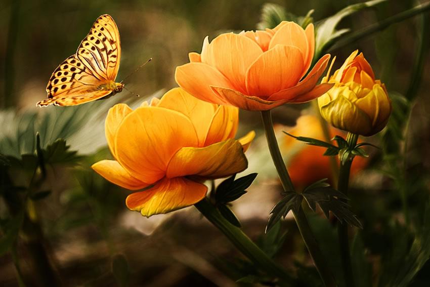 Weybridge Surrey Gardens - Orange flower with butterfly