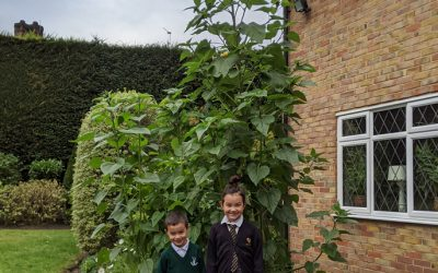 Winners of Weybridge In Bloom's Children's Sunflower Competition Announced