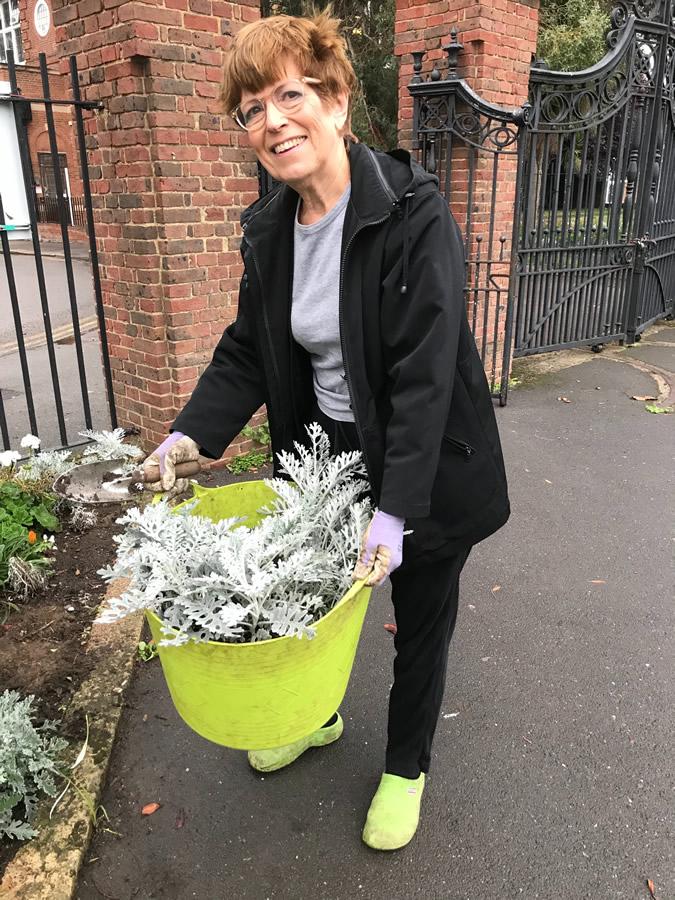 Bedding Plants Recycled from Churchfields Recreation Ground Weybridge Surrey