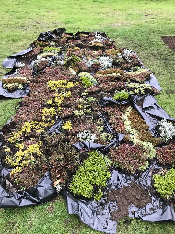 Bedding Plants Recycling - Churchfields Recreation Ground Weybridge Surrey