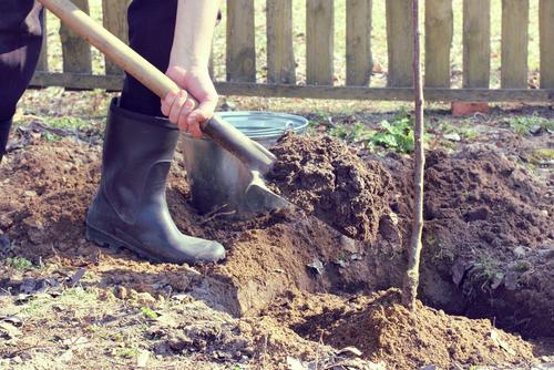 Tree Planting & Gardening Services - Weybridge and Surrey