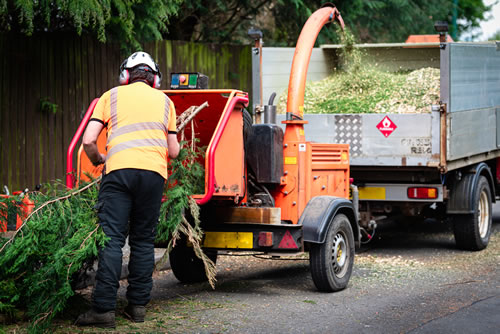 Garden Services include clearing tree cuttings