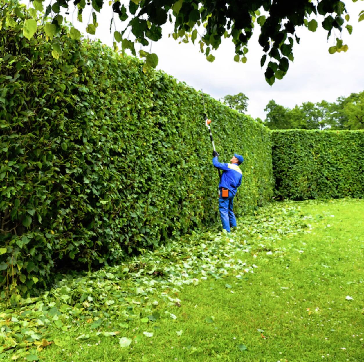 Gardener Services - Weybridge & Elmbridge Surrey