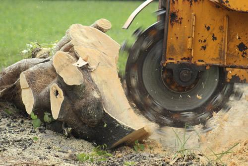 Stump Grinding and Tree Removal Weybridge and Hersham Surrey