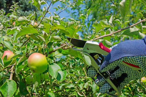 Tree and Shrub Pruning and Gardener Services
