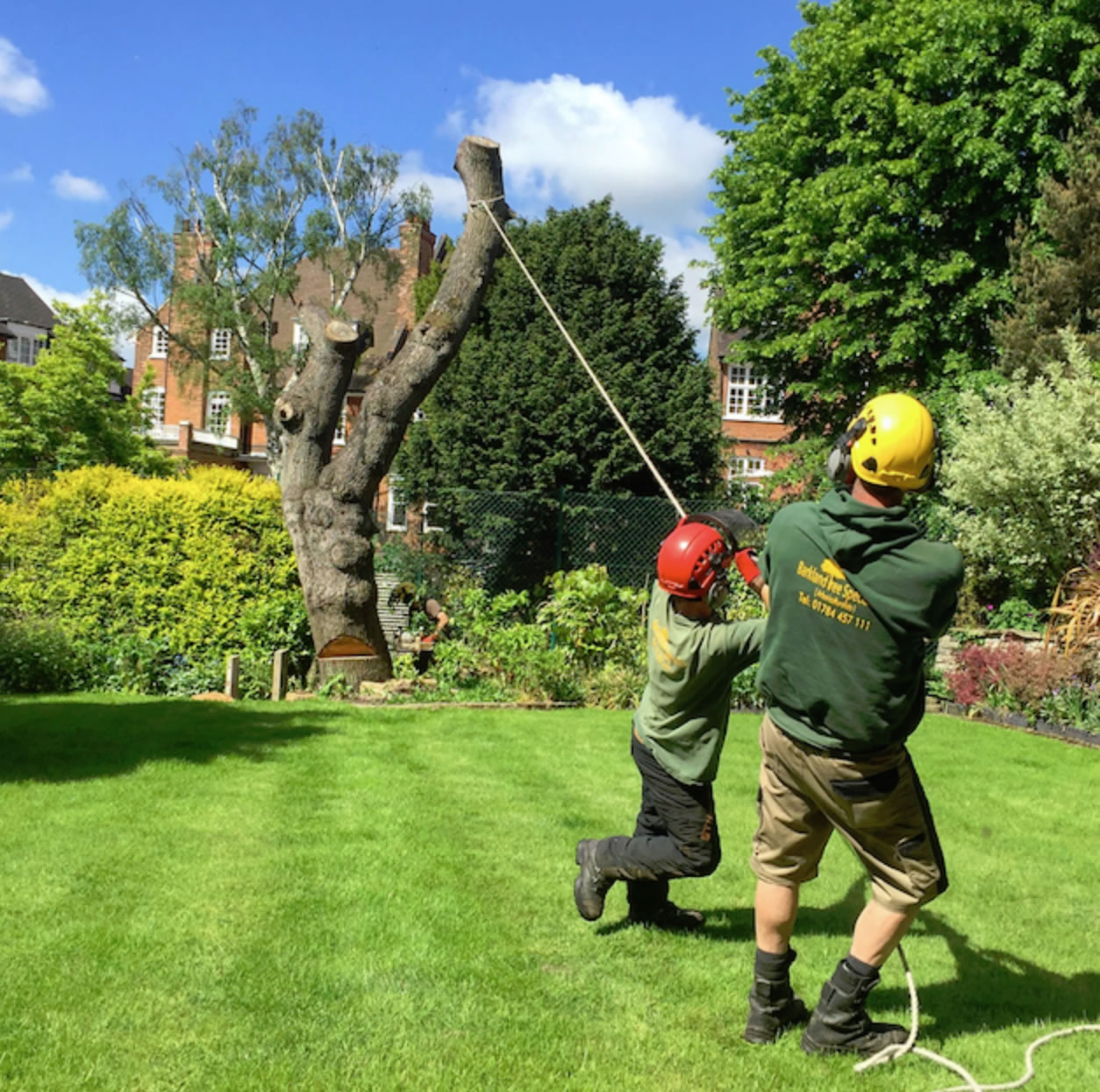 Weybridge Tree Felling - Green Outdoors - Weybridge Surrey Tree Services